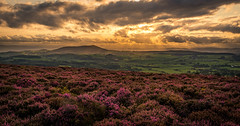 Hidden in Heather, a view from Stiperstones, Shropshire. (christaff1010) Tags: sunset sun vista d750 landscape britain heather purple stiperstones shropshire sky sunlight hills panorama uk clouds