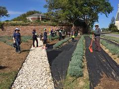 9.27.17 Lavender Field Volunteers