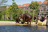 Amsterdam - Zoo (Magdeburg) Tags: amsterdam zoo amsterdamzoo the elephant savanna elefant artis zooartis artisamsterdam indian indianelephant elephas maximus indicus elephasmaximusindicus asian asianelephant indische indischeelefant indischerelefant asiatischen elefanten asiatischenelefanten asiatischerelefant
