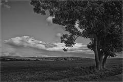 Mr. Tree's and Miss Cloud's Conversation (Armin Fuchs) Tags: arminfuchs tree clouds landscape franken würzburg lengfeld bayern bavaria conversation