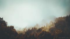 Auric Fall (Raphaelle Monvoisin) Tags: autumn mist fire sky landscape fog morning forest sunset nature sunlight clouds tree summer fall season wood mountain woods outdoors scenics sunbeam beauty woodland beautyinnature