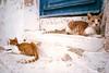 double cat (paologmb) Tags: cub gattini love cute street chat 24mmleicamelmarit leicamtyp240 miao pet cuccioli brotherhood paros