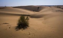 Rajasthan - Jaisalmer - Desert Safari with Camels-8