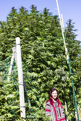 A Giant Plant (fishmonger45) Tags: cannabis medical marijuana greatphotographers