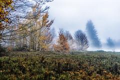 In the Morning Quietness (*Capture the Moment*) Tags: 2017 bavarianforest bayerischerwald bäume fog forest fotowalk landschaften natur nature nebel sonya7m2 sonya7mii sonya7mark2 sonya7ii sonyfe2470mmf4zaoss sonyilce7m2 trees wald wetter