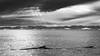 Disko Bay & Humpback's (Role Bigler) Tags: berge birds buckelwal canoneos5dsr ef4070200isusml humpback humpbackwhale natur nature disko diskobay diskoisland eisberg greenland grönland iceberg mountainrange mountains nordatlantik northatlantic wal whale
