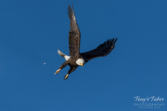 Bald Eagle launch and flight sequence - 7 of 21