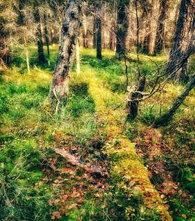 Skog/forest