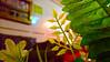 WP_20171022_17_11_59_Pro (AbdulRahman Al Moghrabi) Tags: فندق فنادق شقق مفروشة وحدات سكنية استقبال مباني مبنى مدينة جدة ديكور reception hotel furnished apartments photo city building jeddah jiddah abdulrahmanalmoghrabi