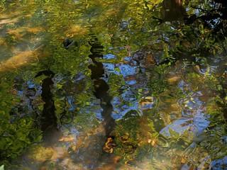 sun on pond--explored 10.25.17