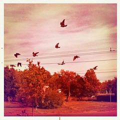 •Birds flying in the morning sky {in color} 🌌🐦💜 (sergiochubby) Tags: squaregraph squaregraphy light cloud bird geometry clouds mobiography beauty minimalism hipstadreamers hipstamaticmagic inexplore onlymobileart onlymobile iphoneonly nostalgia hipsta ukraine mobileart hipstamagic phoneographic hipstsmatic kharkiv visualukraine iphoneography vintage elements artistic canvas landscape melancholy nature tree naturelovers skyscape photoukraine serene skyporn sky urban skypainters foliage urbansky urbanlook dawn autumn hipstamatic dramatic urbanscape city dreamy mood tranquility outdoor plant warm cityscape skyline ukrainian urbanexploration lines highwire wire post cute abstract dove wings colorful