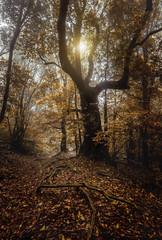 Autumn... (JACRIS08) Tags: