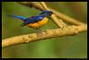 Beauty of The Nature (asifsherazi) Tags: islamabad asifsherazi margalahills pakistan bird rufousbelliedniltava