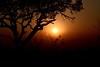 A Madikwe Sunset (The Spirit of the World) Tags: sun light sunset acaciatree silouhettes branches safari nature madikwe gamereserve evening night dusk southafrica africa