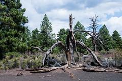 563-14-DS4_3760 (vgwells) Tags: sedona arizona grand canyon national park scottsdale montezuma castle jerome verde railroad sunset crater wupatki