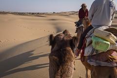 Rajasthan - Jaisalmer - Desert Safari with Camels-71