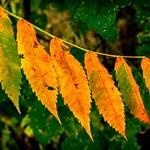 Summer ends leaf by leaf thumbnail