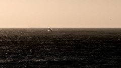 Too Far (sdupimages) Tags: ocean sea whale baleine mer horizon tamron