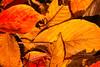 autumn (gwnam.2008) Tags: nature naturalbeauty urbannature park lakepark ilsan goyang gyeonggiprovince 일산호수공원