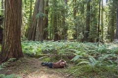 Stalking the Wild Ferns (Bob Dass) Tags: mendocinocounty montgomerywoodsstatereserve nikkor282003556 nikond810 photographer redwoods