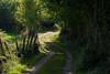 Caleya (Oscar F. Hevia) Tags: calea caleya camino cerca verde vegetacion matorral road fence green vegetation bush asturias asturies españa focesdelriopendón fuensanta nava paraísonatural principadodeasturias spain caminorural countryroad pras45