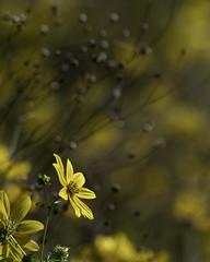 _SAF0706 (sara97) Tags: copyright©2017saraannefinke flower flowers insect missouri nature outdoors photobysaraannefinke saintlouis towergrovepark wildflowers