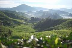 (Julena_Alias) Tags: bohteaplantation tea mountain green scenary cuticutimalaysia pahangdarulmakmur malaysia cameronhighlands 📷byjulena