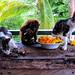 Wildmeat in Guyana's coast