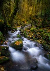 What A Ruckel (Björn Burton Photography) Tags: columbiarivergorge oregon pnw autumn river creek ruckelcreek fall landscape bjornburtonphotography