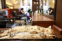 Sleeping Cats (superzookeeper) Tags: 5dmk4 5dmkiv canoneos5dmarkiv ef2470mmf28liiusm eos digital taiwan hsinchu tw cat catsofflickr catsofhsinchu catsoftaiwan bokeh formosa favorites zzz sleepingcat sleep over1000views nap street catnap
