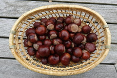 Conkers DSC02380 (rowchester) Tags: horse chestnut fruit conker brown basket shiny autumn seeds nuts seasonal season autumnal