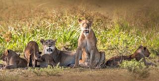 Singita, Serengeti