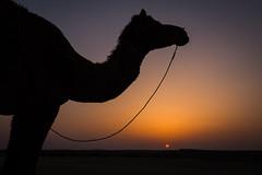Rajasthan - Jaisalmer - Desert Safari with Camels-67