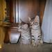 A Tale of Two Kitties 😻