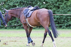 _MG_5872 (dreiwn) Tags: ridingarena reitturnier reiten reitplatz reitverein reitsport ridingclub equestrian showjumping springreiten horse horseback horseriding horseshow pferdesport pferd pony pferde tamronsp70200f28divcusd