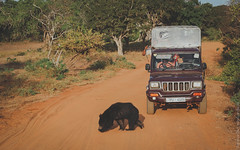 25.06-Yala-National-Park-Sri-Lanka-canon-1500px-016