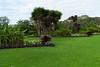 L1010288 Centennial Park Sydney (Sugi Ong) Tags: rangefinder manualfocus outdoor garden parks leica me ccd sydney australia centennial voigtlander ultron 28mm prime