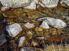 Tura munte retezat Octombrie 2017 (Marian VULPE) Tags: munte turamunte hiking retezat pietrele lolaia bucura custura curmatura zanoaga gales tauri tau gentiana lacglaciar zapada