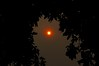 red sun (remcclean) Tags: 16oct red sun monday storm forest fires passiflora flora