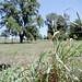 Grass, trees, bokeh