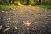 On The Autumn Way / Sur le chemin de l'automne (Gilderic Photography) Tags: autumn chartreuse liege leaves automne belgium belgique belgie way path road macro ground leaf yellow panasonic lumix lx100 gilderic