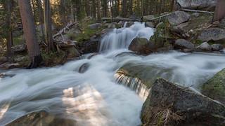 Yosemite Forest Flow