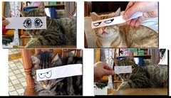 Gatti della Patti!! (La Patti) Tags: cat trick joke laugh eyes animal gatto gatti cats idee intelligenti clever ideas occhi