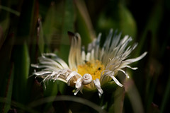 Con caracol :) (luenreta) Tags: caracol sol rayitodesol primavera 7dwf flora