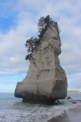 Cathedral Cove / Coromandel