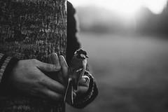 Animal Stories. (Violette Nell) Tags: portrait bird oiseau vintage animalstories noiretblanc monochrome analog blackandwhite boy retro places tree nature landscape arbre violettenell 35mm feeling aesthetic mood poetry dark human fineart france autumn soul ethereal melancholy animal bw nb travel ybs2017 yourbestshot2017 animaux bnw