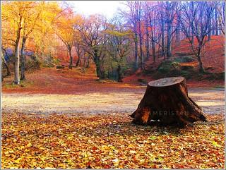 Autumn at Forest Belgrat,