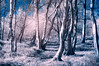 IF in the Woods (quiltershaun) Tags: woods infrared if filter nature colour trees white nikon hoya d3200 derbyshire peak district sky autumn