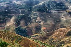 DOURO VINEYARDS (Francisco (PortoPortugal)) Tags: 2442017 20121124fol8289 douro vinhas vineyards outono autumn landscape paisagem portowine vinhodoporto portugal portografiaassociaçãofotográficadoporto franciscooliveira