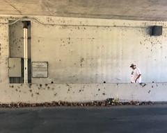 028 Rich Below Wardlow (saschmitz_earthlink_net) Tags: 2017 california longbeach eldorado orienteering laoc losangelesorienteeringclub losangeles losangelescounty eldoradoeastregionalpark park parks